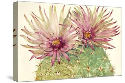 Cactus Blossoms I-Tim OToole-Stretched Canvas Print