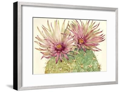 Cactus Blossoms I-Tim OToole-Framed Art Print