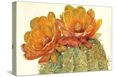 Cactus Blossoms II-Tim OToole-Stretched Canvas Print