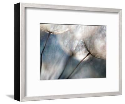 Carefree-Ursula Abresch-Framed Photographic Print