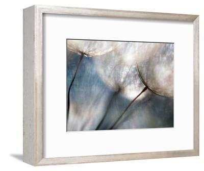 Carefree-Ursula Abresch-Framed Premium Photographic Print