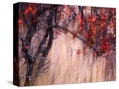 Autumnal-Ursula Abresch-Stretched Canvas Print