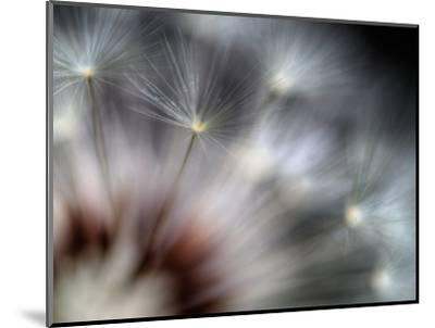 Fireworks-Ursula Abresch-Mounted Photographic Print