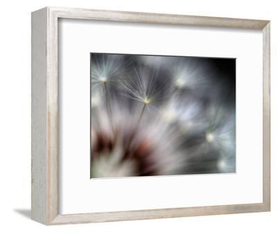 Fireworks-Ursula Abresch-Framed Photographic Print