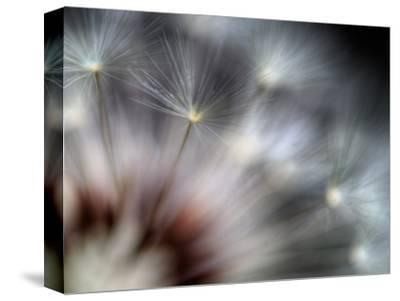 Fireworks-Ursula Abresch-Stretched Canvas Print