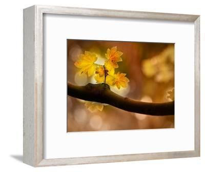 In Autumn 2-Ursula Abresch-Framed Photographic Print