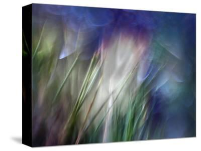 Needles-Ursula Abresch-Stretched Canvas Print