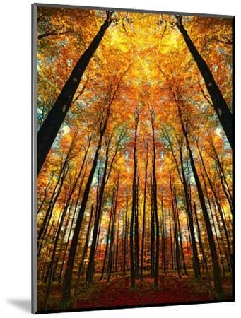 Cathedral Fall-Philippe Sainte-Laudy-Mounted Premium Photographic Print