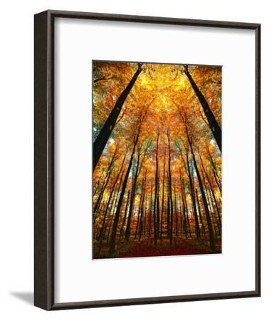 Cathedral Fall-Philippe Sainte-Laudy-Framed Premium Photographic Print