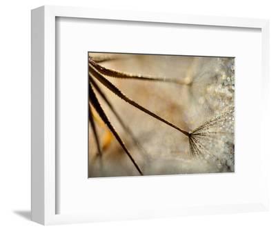 Sparkle-Ursula Abresch-Framed Premium Photographic Print