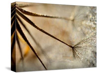 Sparkle-Ursula Abresch-Stretched Canvas Print