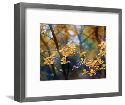 Autumn Leaves-Ursula Abresch-Framed Photographic Print