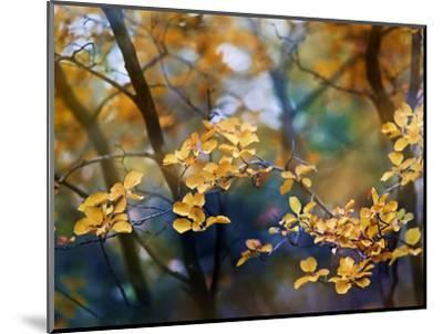 Autumn Leaves-Ursula Abresch-Mounted Photographic Print