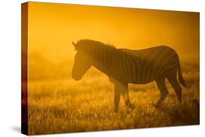 Plains Zebra (Equus Quagga) at Sunset, Savuti Marsh, Botswana-Wim van den Heever-Stretched Canvas Print