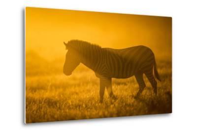 Plains Zebra (Equus Quagga) at Sunset, Savuti Marsh, Botswana-Wim van den Heever-Metal Print