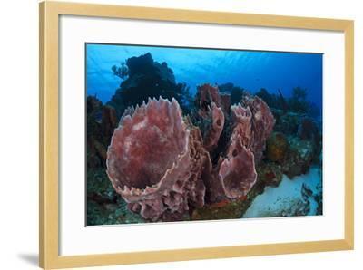 Giant Barrel Sponge (Xestospongia Muta) Cozumel Reefs National Park-Claudio Contreras-Framed Photographic Print