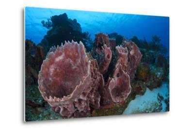 Giant Barrel Sponge (Xestospongia Muta) Cozumel Reefs National Park-Claudio Contreras-Metal Print