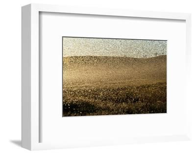 Locust Plague (Locusta Migratoria Capito) Threatens Crops in South Madagascar, June 2010-Inaki Relanzon-Framed Photographic Print