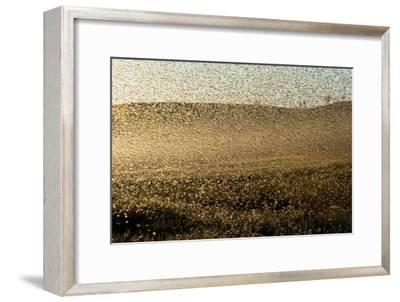 Locust Plague (Locusta Migratoria Capito) Threatens Crops in South Madagascar, June 2010-Inaki Relanzon-Framed Premium Photographic Print
