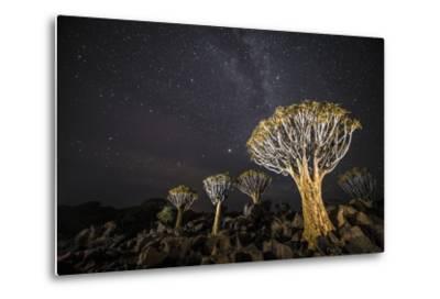 Quiver Trees (Aloe Dichotoma) with the Milky Way at Night, Keetmanshoop, Namibia-Wim van den Heever-Metal Print