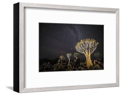 Quiver Trees (Aloe Dichotoma) with the Milky Way at Night, Keetmanshoop, Namibia-Wim van den Heever-Framed Photographic Print