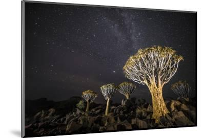Quiver Trees (Aloe Dichotoma) with the Milky Way at Night, Keetmanshoop, Namibia-Wim van den Heever-Mounted Photographic Print