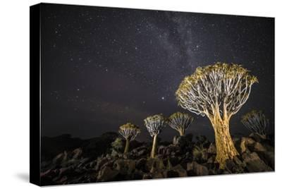 Quiver Trees (Aloe Dichotoma) with the Milky Way at Night, Keetmanshoop, Namibia-Wim van den Heever-Stretched Canvas Print