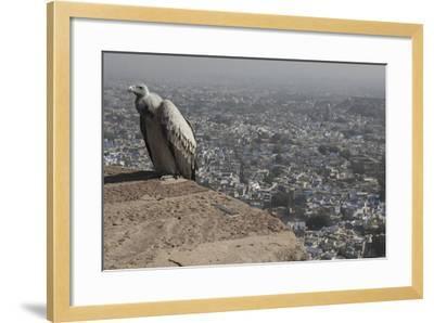 Long-Billed Vulture (Gyps Indicus)-Bernard Castelein-Framed Photographic Print