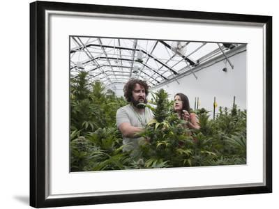 Man and Woman with Cannabis Plant in Organic Marijuana Farm, Pueblo, Colorado, USA, June 2015-Jeff Rotman-Framed Photographic Print