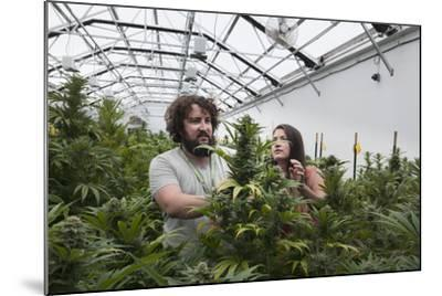 Man and Woman with Cannabis Plant in Organic Marijuana Farm, Pueblo, Colorado, USA, June 2015-Jeff Rotman-Mounted Photographic Print