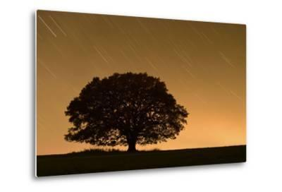 English Oak Tree (Quercus Robur) Silhouetted Against Orange Sky with Star Trails-Solvin Zankl-Metal Print