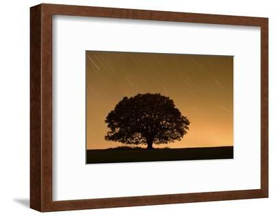 English Oak Tree (Quercus Robur) Silhouetted Against Orange Sky with Star Trails-Solvin Zankl-Framed Photographic Print