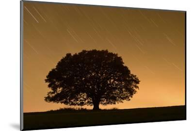 English Oak Tree (Quercus Robur) Silhouetted Against Orange Sky with Star Trails-Solvin Zankl-Mounted Photographic Print