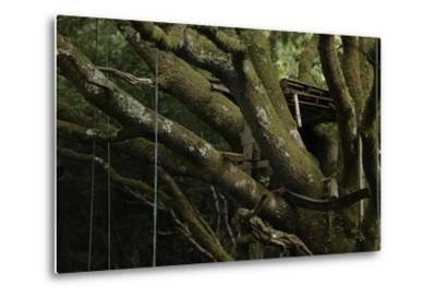 Oak Tree (Quercus Sp) with Ropes for Climbing and a Wooden Pallet to Create a Platform-Solvin Zankl-Metal Print
