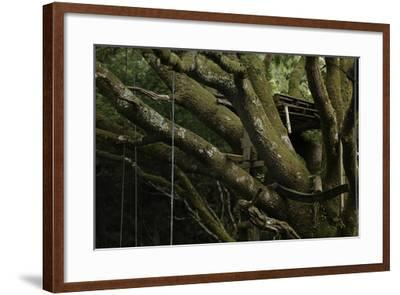 Oak Tree (Quercus Sp) with Ropes for Climbing and a Wooden Pallet to Create a Platform-Solvin Zankl-Framed Photographic Print