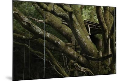 Oak Tree (Quercus Sp) with Ropes for Climbing and a Wooden Pallet to Create a Platform-Solvin Zankl-Mounted Photographic Print