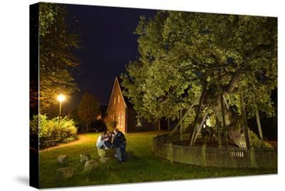 Femeiche' the Court Tree at Night-Solvin Zankl-Stretched Canvas Print