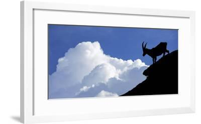 Silhouette of Alpine Ibex (Capra Ibex) Against Thunderstorm Clouds-Philippe Clement-Framed Photographic Print