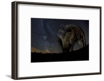 Wild Boar (Sus Scrofa) at Night with the Milky Way in the Background, Gyulaj, Tolna, Hungary-Bence Mate-Framed Photographic Print