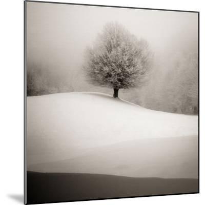 Winter Degradee-SC-Mounted Photographic Print