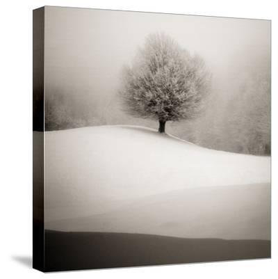 Winter Degradee-SC-Stretched Canvas Print