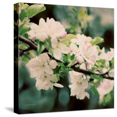 Apple Blossoms I Crop-Elizabeth Urquhart-Stretched Canvas Print