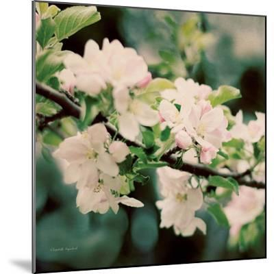 Apple Blossoms I Crop-Elizabeth Urquhart-Mounted Art Print
