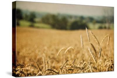 Blissful Country I Crop-Elizabeth Urquhart-Stretched Canvas Print