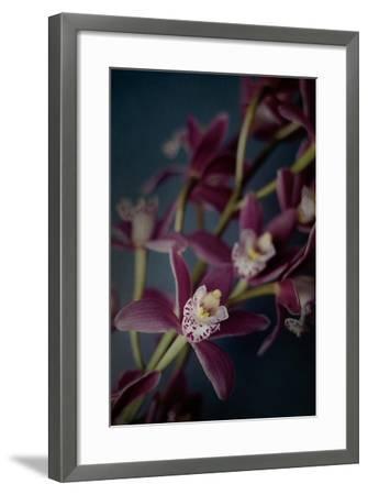 Dark Orchid III-Elizabeth Urquhart-Framed Art Print