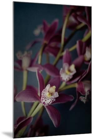 Dark Orchid III-Elizabeth Urquhart-Mounted Art Print