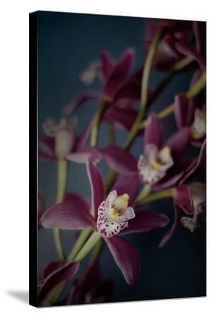 Dark Orchid III-Elizabeth Urquhart-Stretched Canvas Print