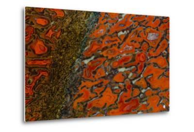 Dinosaur Petrified Bone-Darrell Gulin-Metal Print
