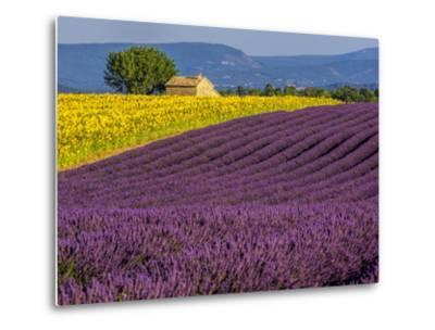 France, Provence, Old Farm House in Field of Lavender and Sunflowers-Terry Eggers-Metal Print