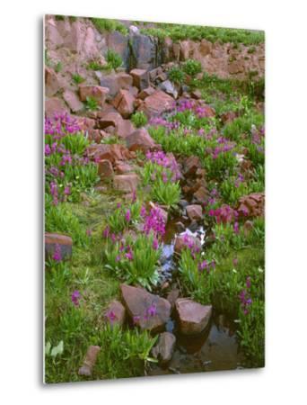 Colorado, San Juan National Forest-John Barger-Metal Print